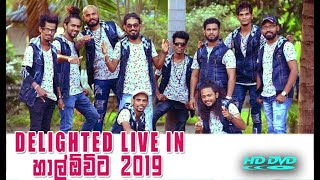 Delighted Live in Halowita 2019